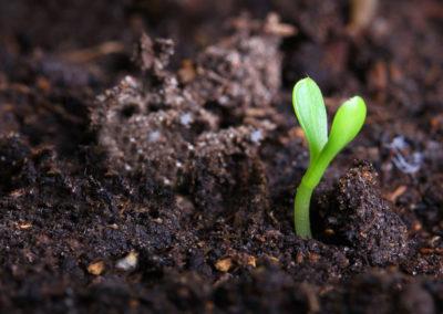 Pioppogatto: Impianto di compostaggio